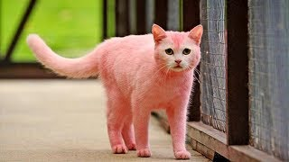 10 MOST UNUSUAL CATS EVER 😍