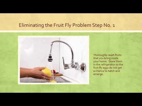 How to Rid Sprouts of Fruit Flies