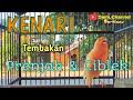 Kenari Gacor Tembakan Ciblek Dan Prenjak  Mp3 - Mp4 Download