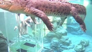 Bu Videoları Gördükten Sonra Girmek İstemeyeceğiniz 5 Yüzme Havuzu