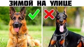 5 Лучших пород собак для охраны частного дома