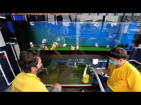 Wut สาธุ 49  งาน O4FS ตู้ปลาทอง 72 20 20 กรองล่าง + 48 18 20 กรองบน จัดเต็มทุกระบบ ณ ชั้น 3 Set 2