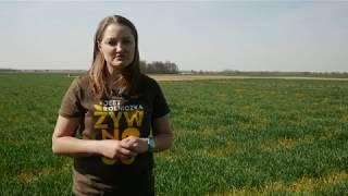 Zabiegi wiosenne w uprawie zbóż