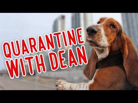 Quarantine with Dean!