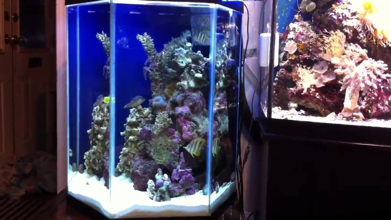 72 Bow And 29 Hexagon Saltwater Aquarium Youtube