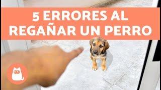 5 ERRORES COMUNES AL REGAÑAR UN PERRO