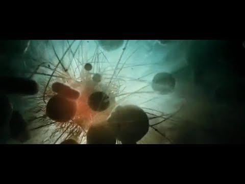 Tool - Descending - Evolution Animation [New Song 2018]