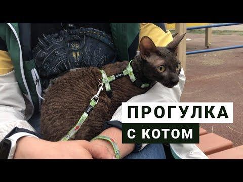 Вопрос: Сколько нужно выгуливать кошку?