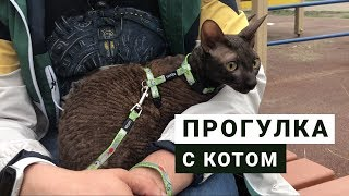 ПЕРВЫЙ РАЗ ВЫГУЛИВАЮ КОТА / как выбрать поводок для кошек / реакция корниш рекса на воду