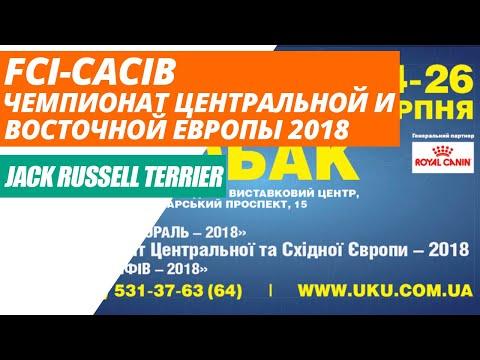 Выставка собак FCI-CACIB, Чемпионат Центральной и Восточной Европы 2018, Киев, Джек Рассел Терьер