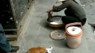 ベトナムの犬のペットフードは屋台から購入するらしい・・・