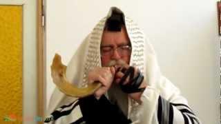 ショファー は、ユダヤ教の宗教行事で用いられる、角でできた楽器。角笛...