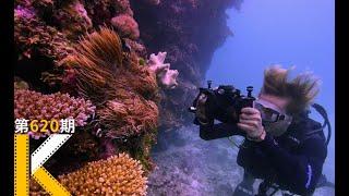 【看电影了没】一场美到不可思议的死亡,9.0高分纪录片《追逐珊瑚》