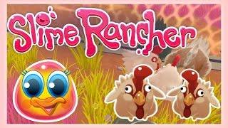 Slime Rancher : CHICKENS! ~ Sqaishey