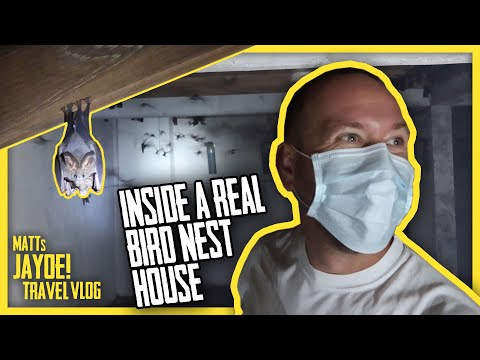 Exploring a REAL Birds Nest House in Malaysia! | Malaysia Travel VLOGS