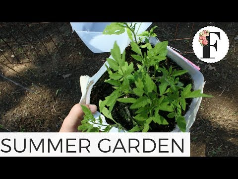 Planting the Summer Garden: Cut Flower Farm Gardening for Beginners Growing Flowers from Seed Plants