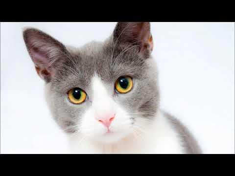 Rüyada Kara (Siyah) Kedi Görmek, Sevmek, Yavrusu, Saldırması Tabiri ve Yorumu | Rüya Yorumları