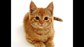 Котенок носится по квартире