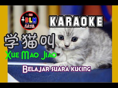 xue-mao-jiao---karaoke---学猫叫---terjemahan---lyrics---lirik