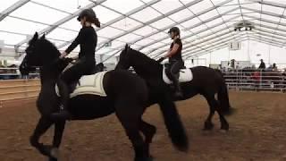 フリージアン・ホースの紹介 5 Friesianhorse presentation 2019 0503
