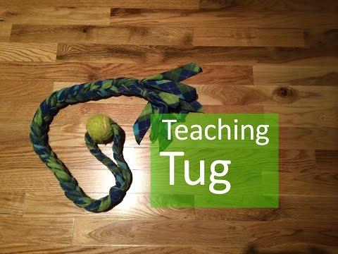 Playing Tug With Your Dog
