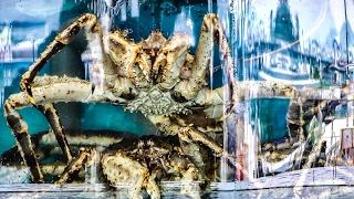Giant Crab, Lobsters, Big Shrimps. The Fish Market and Restaurants of Sai Kung, Hong Kong