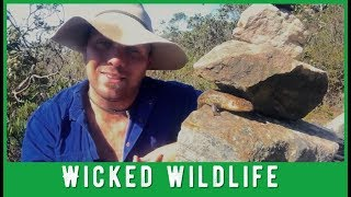 3 Reasons NOT To Stack Rocks In Wilderness Areas
