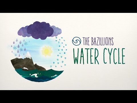 Water Cycle  The Bazillions