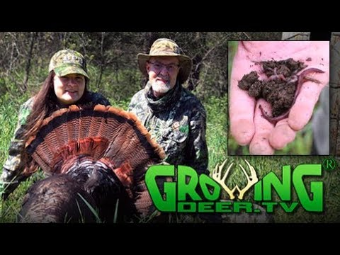 Intense Turkey Hunting: A Calling Strategy That Worked (#442) @GrowingDeer.tv