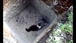 видео Смешные коты. Кот упал об стену.