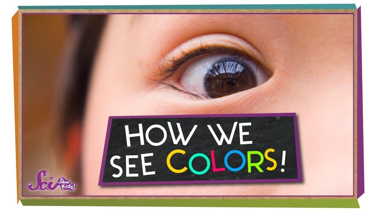 Senses explained for children | Hearing, touch, sight, smell