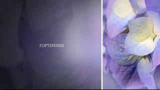 видео Носовка (Черниговская область)