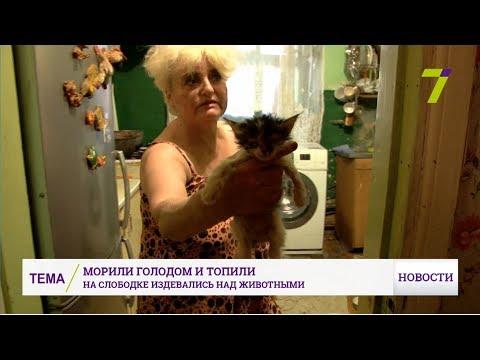 В доме на Слободке под видом приюта «Радуга» мучили и убивали животных