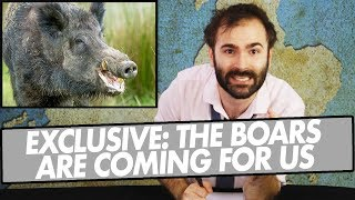 exclusive-the-boars-are-coming-for-us-a-special-news