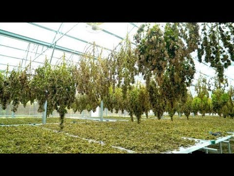 They had zero experience with cannabis. Now they run a hemp farm.