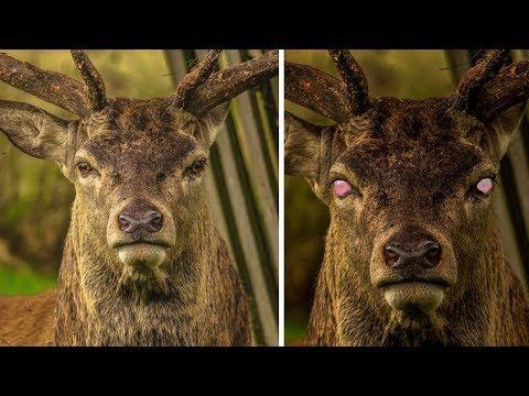 Ein tödliches Virus, das die Menschheit auslöschen kann, wurde in den USA bei Hirschen gefunden!