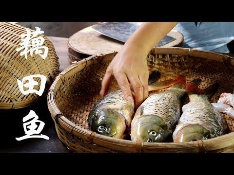 弟弟将鱼笼放藕田里,一天后捕到几条藕田鱼,加酸木瓜做成了云南特有的酸辣鱼【滇西小哥】
