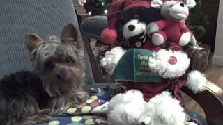 Yorkshire Terrier Twas The Night Before Christmas