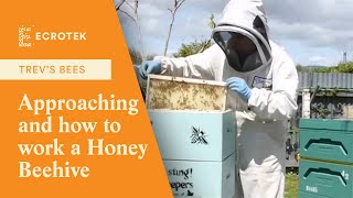 Trevs Bees - Approaching and how to work a Honey beehive, with…