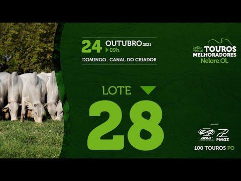 LOTE 28 - LEILÃO VIRTUAL DE TOUROS MELHORADORES  - NELORE OL - PO 202