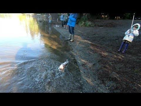 Fishing | Rainbow Trout | Beaver Lake, Sammamish, WA 11/19/2018
