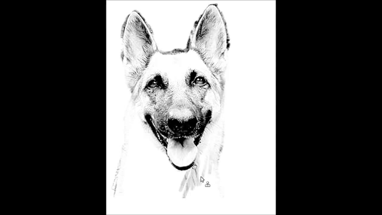 How To Draw A Dog Head Fast Timelapse German Shephard Easy Step