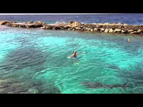 Dolphin Academy Curacao Freedive