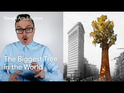 The Biggest Tree in the World: Hyper History with Vsauce2 #PreviouslyOnEarth