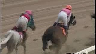 2009年度福山競馬アラ系A1B1競走「残暑見舞い特別」