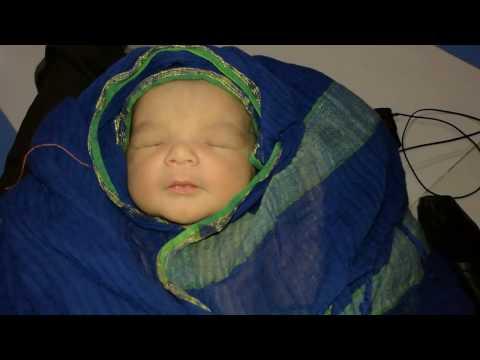 New baby Shabiha is born 06-02-2017