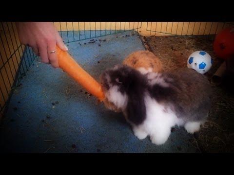 Es gab mal wieder die Möhrchen ;) - des Kaninchen liebstes Leckerchen from YouTube · Duration:  1 minutes 2 seconds