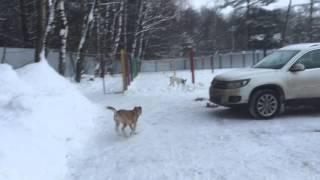 Тошик  Собака в добрые руки