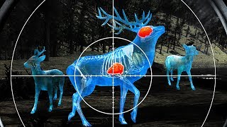 Wild Hunt:Sport Hunting Game.3D Shooting Simulator - Android Gameplay