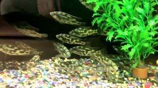 Завоз рыбы в магазин Цены
